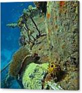 Coral Growth On A Ship Wreck Canvas Print