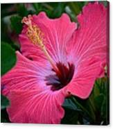 Coral Hibiscus Canvas Print