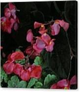 Coral Petals Canvas Print