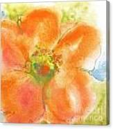 Coral Poppy II Canvas Print