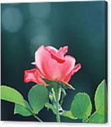 Coral Sunshine Canvas Print