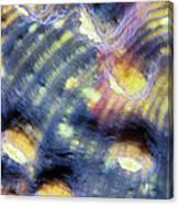 Corals 3 Canvas Print