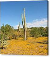 Cordon Cactus And Yellow Wildflowers Canvas Print