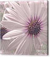 Coreopsis - Dreaming In Pink Canvas Print