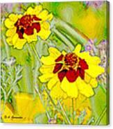 Coreopsis Flowers Canvas Print