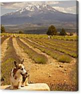 Corgi And Mt Shasta Canvas Print