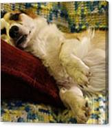 Corgi Asleep On The Pillow Canvas Print