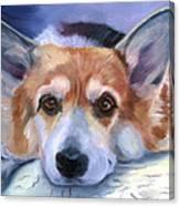 Corgi Gazing Canvas Print