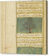 Corinda Tree (carissa Carandas) Canvas Print