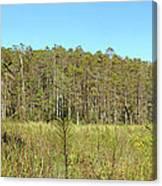 Corkscrew Swamp 1 Canvas Print