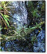 Corkscrew Swamp 16 Canvas Print