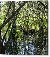 Corkscrew Swamp 3 Canvas Print