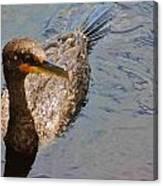 Cormorant After A Swim Canvas Print