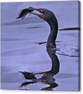 Cormorant Catch Reflection Beauty Canvas Print
