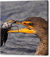 Cormorant Catching Catfish Canvas Print
