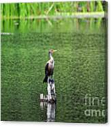 Cormorant Chilling Canvas Print