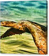Cormorant On The Move Canvas Print