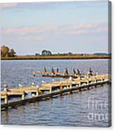 Cormorants And Seagulls On Old Dock Near Blackwater  National Wildlife Refuge Near Cambridge Md Canvas Print