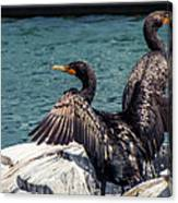Cormorants Canvas Print