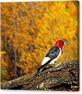 Corn Fed Woodpecker Canvas Print