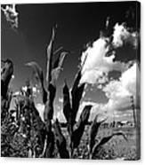 Corn Maze 01 Bw Canvas Print