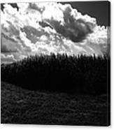 Corn Maze 03bw Canvas Print