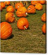 Corn Plants With Pumpkins In A Field Canvas Print