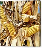 Corn Shock - Sign Of Autumn Canvas Print