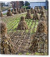 Corn Shocks Amish Field Canvas Print
