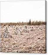 Corn Shocks Canvas Print