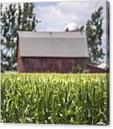 Corn With A Red Barn  Canvas Print
