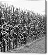 Cornfield Black And White Canvas Print