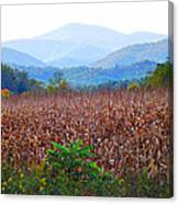 Cornfield In The Mountains Canvas Print