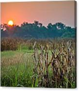 Cornfield Morning Canvas Print