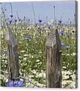 Cornflower Meadow Canvas Print