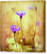 Cornflowers On The Meadow Canvas Print