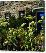Cornish Cow Parsley  Canvas Print