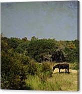 Corolla Pony Canvas Print