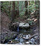 Corte Madera Creek On Mt. Tam In 2008 Canvas Print