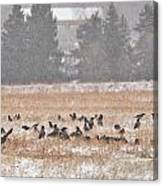 Corvus Field Canvas Print