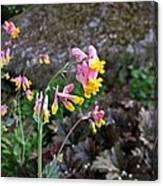 Corydalis In Garden Canvas Print