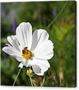 Cosmea And Bee Canvas Print