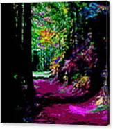 Cosmic Energy Of A Redwood Forest On Mt Tamalpais Canvas Print