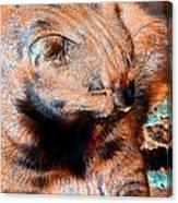 Cosmic Kitty 3 Canvas Print