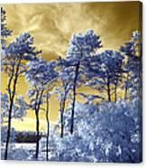 Cosmic Canvas Print