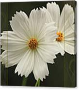 Cosmos And Hearts Canvas Print