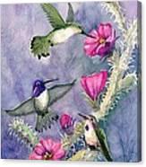 Costa Hummingbird Family Canvas Print