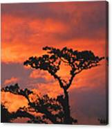 Costa Rican Sunset Canvas Print