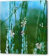 Cottage Garden Three Canvas Print