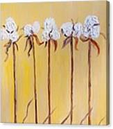 Cotton Chorus Line Canvas Print